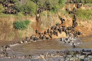 Migration Serengeti