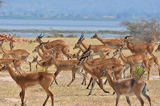 lake mburo nationalpark